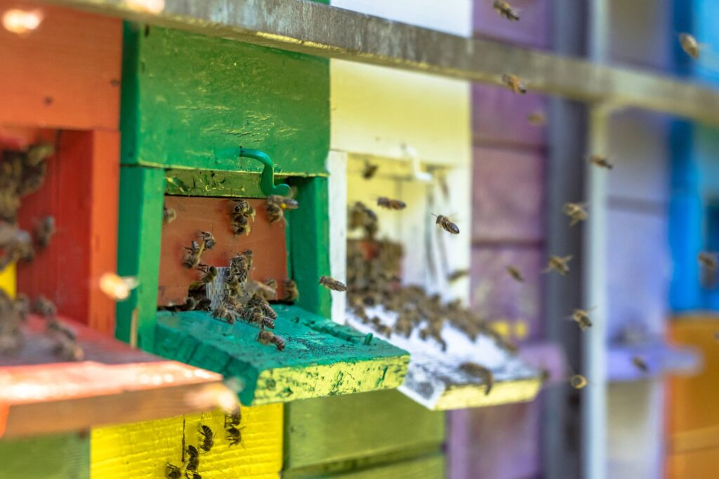 Een familie bijen die thuis komen