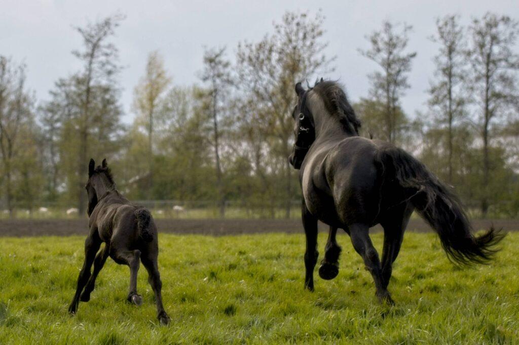 Jong paard leert samenwerken met je familie